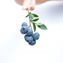 blueberry-fruit-blue-45908